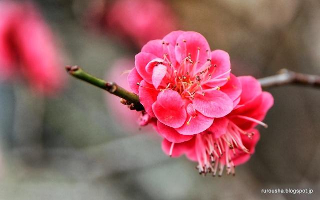 Image copyright Rurousha.
