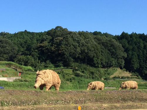 giant boars 2