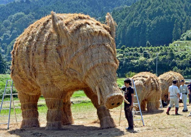 giant boars 3